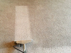 carpet cleaners in parkville