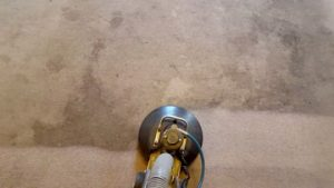 steam carpet cleaning in a Platte County home